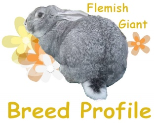 CLICK HERE TO SEE THE BREED PROFILE